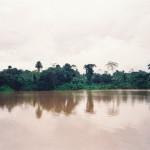 243 Amazonas (Copy)
