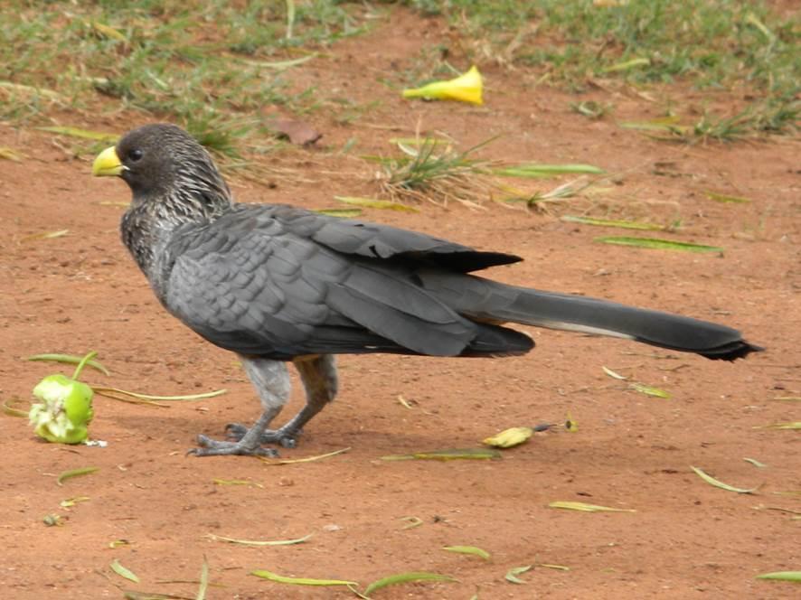 Birds, Uganda