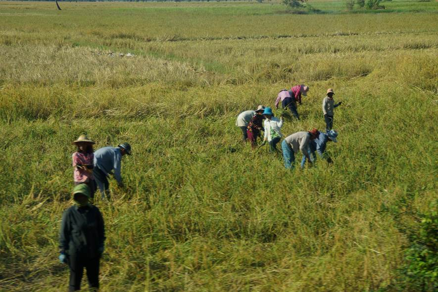 Cambodia, Farm Workers